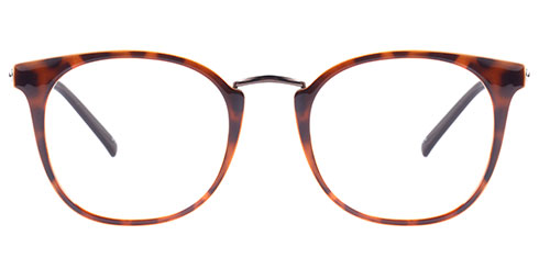 Discover ST003 Tortoise